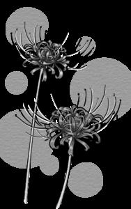 彼岸花のイラスト(白黒)