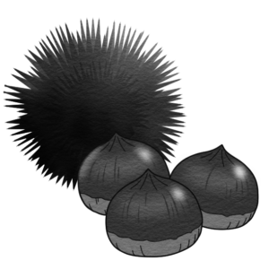 栗のイラスト(白黒)