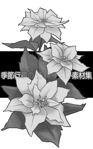 ポインセチアのイラスト(白黒版)