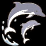イルカのイラスト(カラー版)