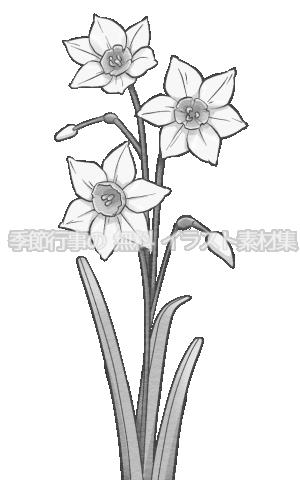 水仙のイラスト(白黒版)