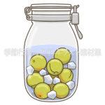 梅のシロップ漬けのイラスト(カラー版)