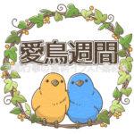 愛鳥週間のイラスト(カラー版)