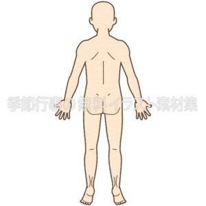 人体図の全身(背面)のイラスト