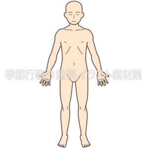 人体図の全身(正面・背面)イラスト