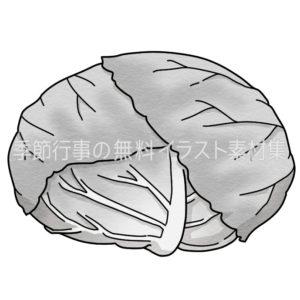 キャベツのイラスト(白黒版)