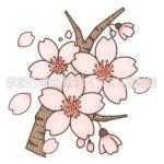 桜の花と花びらのイラスト(カラー版)