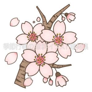 桜の花と花びらのイラスト