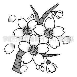 桜の花と花びらのイラスト(白黒版)