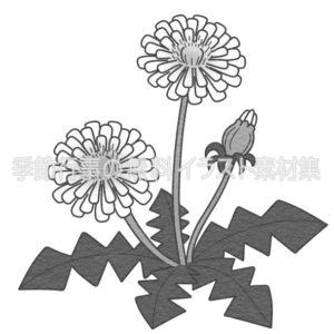 たんぽぽのイラスト(白黒版)