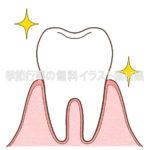 健康な歯のイラスト