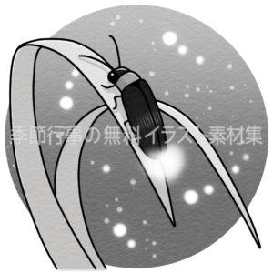 蛍(ホタル)のイラスト(白黒版)