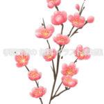 梅の花のイラスト(カラー版)