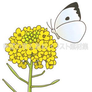 菜の花と蝶のイラスト