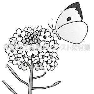 菜の花と蝶のイラスト(白黒版)