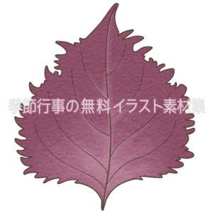 赤紫蘇のイラスト(カラー版)
