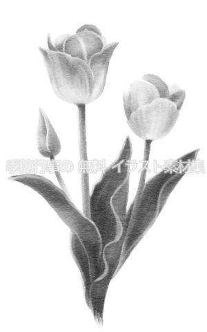 チューリップのイラスト(白黒版)